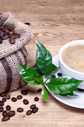 Kaffeeanbau in Vietnam