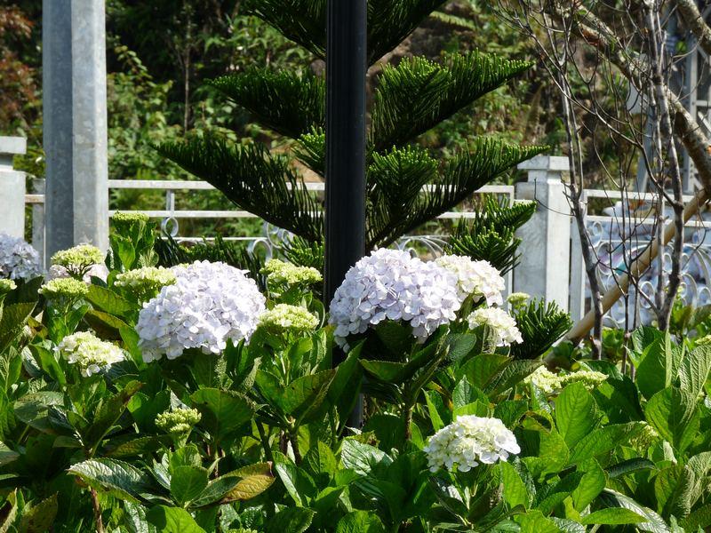 Flora in Vietnam