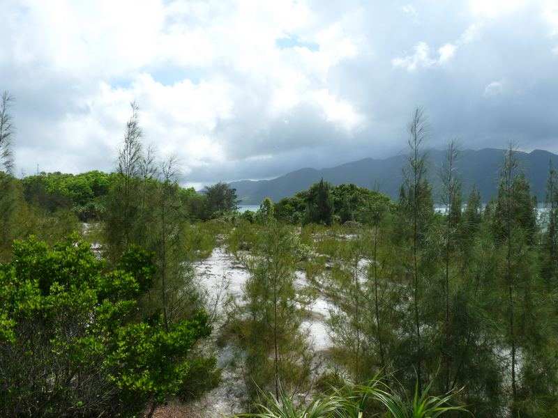 Wälder von Vietnam